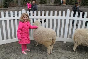 SheepLady