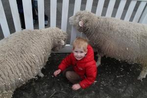 SheepMan2