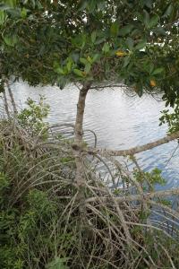 BigCypressSwamp2