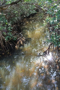 JNDing_Swamp