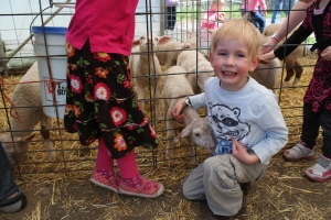 Lambs_Lachie2