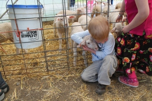 Lambs_Lachie3