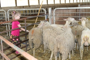 ShearingBarn