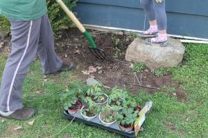 VeggiePlanting