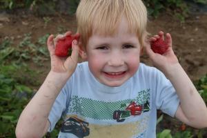 StrawberryEars