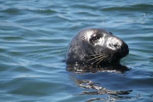 SealsGalore7
