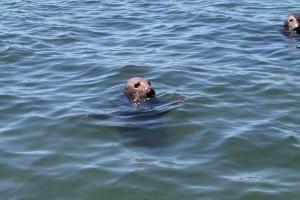 SealsGalore8