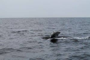 Whales55