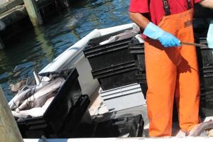 Wharf_FishingBoat