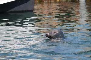 Wharf_Seal2