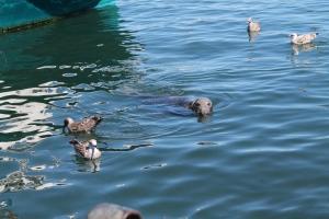 Wharf_Seals