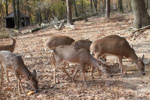 DeerFamily
