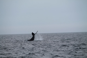 Whales10