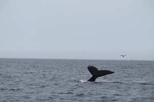 Whales11