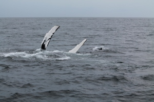 Whales12