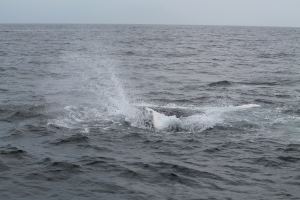 Whales14