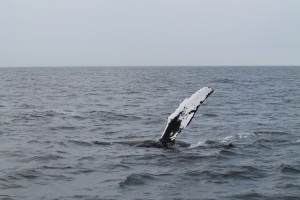 Whales15
