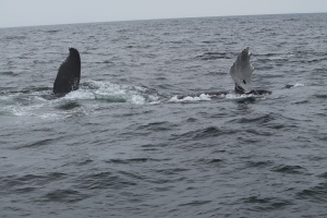 Whales17
