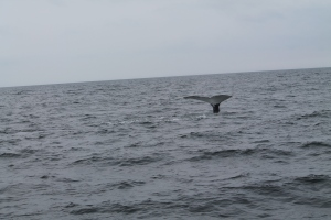 Whales19