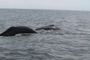 Whales6