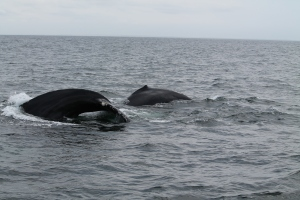 Whales8