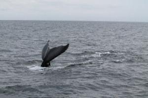 Whales9