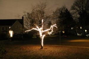 TreeLights 001