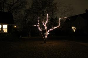 TreeLights 004