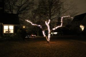 TreeLights 009