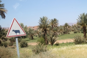 Morocco 226